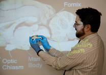 Psychology Teacher with Brain Demo